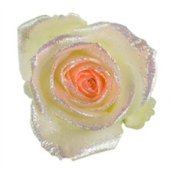 Avalanche Bling Bling Orange Rose