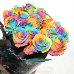 Rainbow Roses - Happy Roses
